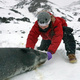 Leopard Seals! Special Lecture with Dan Costa and Sarah Kienle