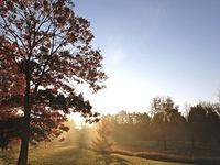 Sunday Arboretum Tours