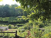 Saturday Garden Tours