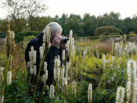 Film & Talk: Five Seasons, The Gardens of Piet Oudolf