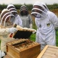 Honey Beehive Tours