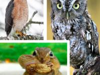 Wildlife Nutrition