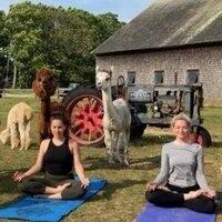 Alpaca Yoga