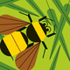 Third Annual Bee Blitz