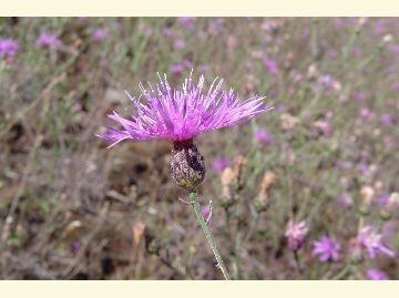 Keweenaw Invasive Species Management Area (KISMA)