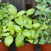 Growing, Cooking and Preserving with Herbs