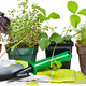 Herbs in Disguise: A Weed is Just a Weed ... or Is It?